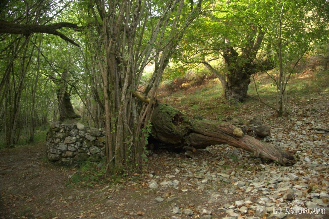 Desde que entramos en el bosque, pasado un puente de madera, encontramos figuras de todo tipo en los árboles o las rocas.