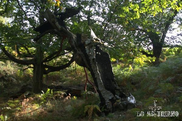 Este árbol parece tener una gran bocaza abierta...