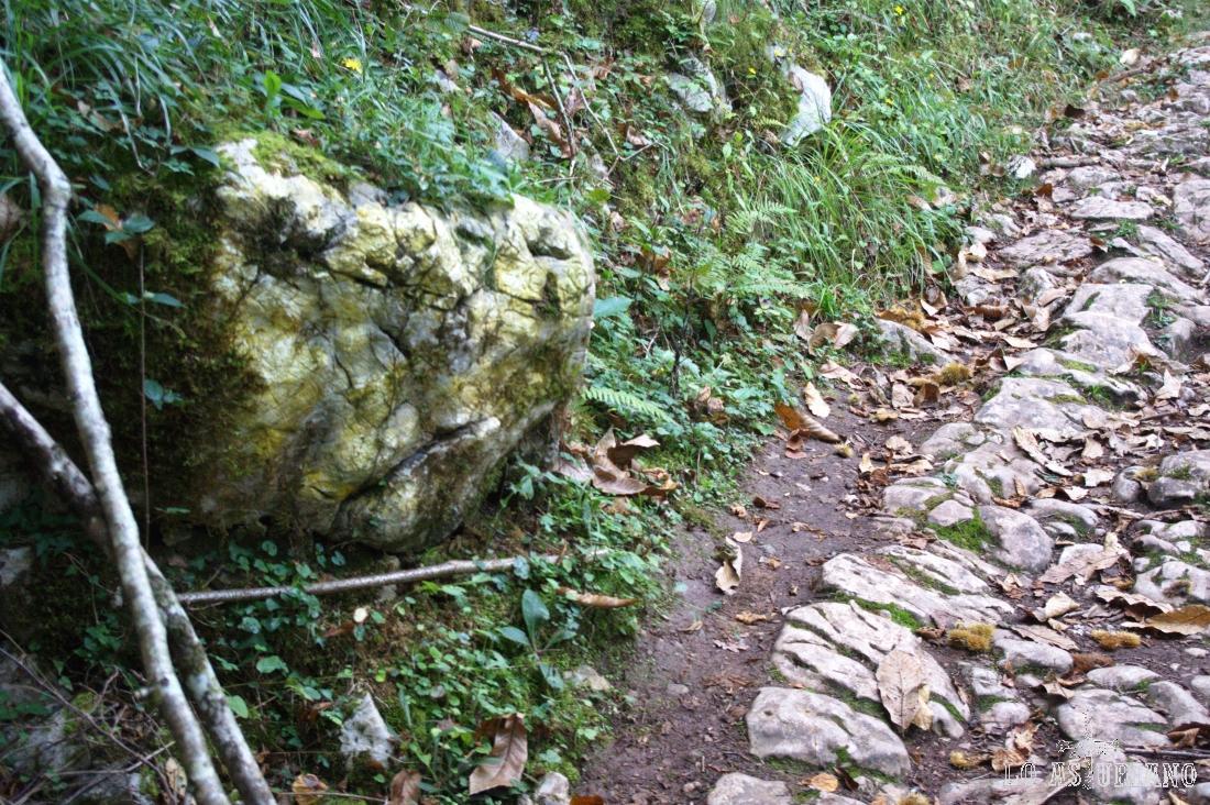 roca que parece la cabeza de un reptil