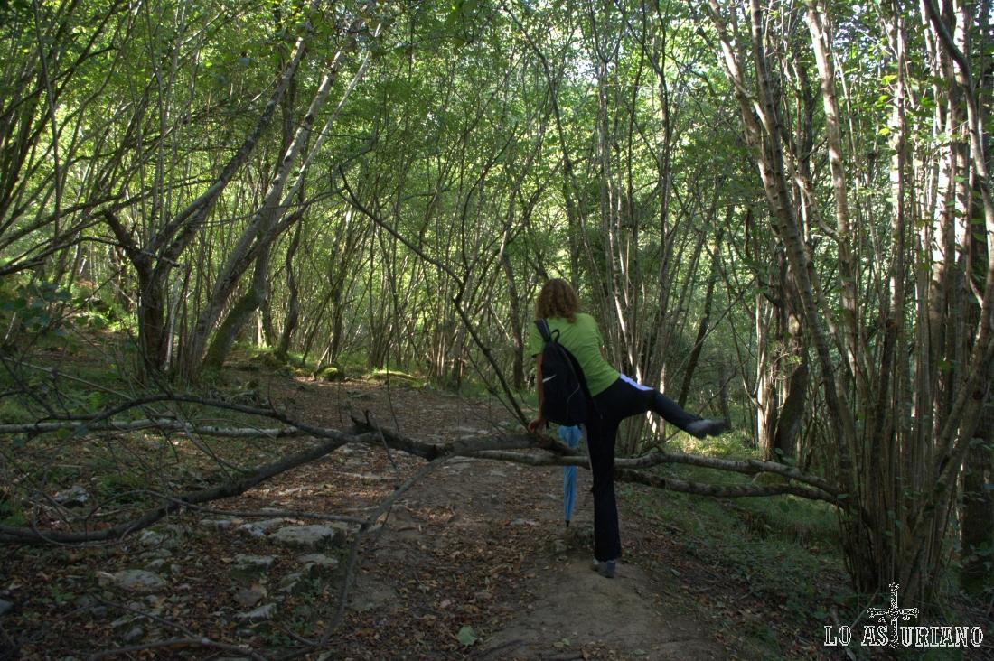 saltando la rama sobre el camino