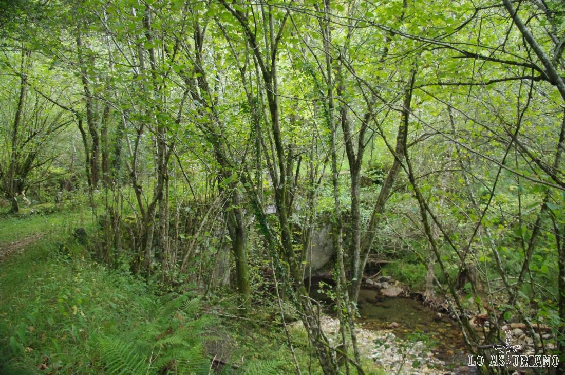 Cruzamos el puentito sobre el río Cormenero, que está cerca de verter sus aguas al Sella.