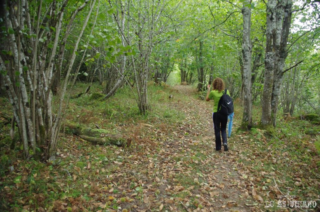 Volvemos a transitar por los bosques aledaños al Beyu Pen, paralelamente al Sella.