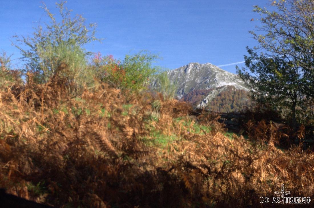 Helechos secos cerca de La Ablanosa. Aparece ya la silueta del Maciédome, de 1903 metros.