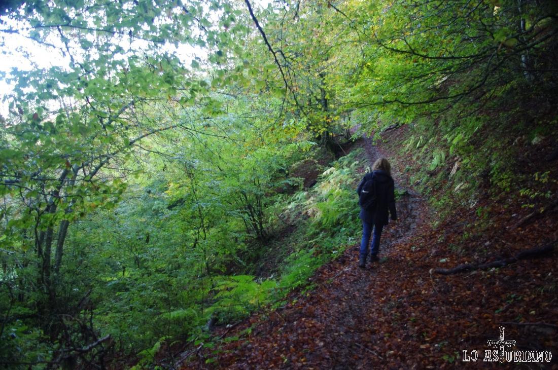 entrando en el bosque Fabucado