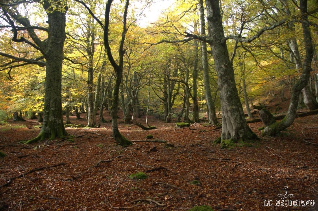 El bosque Fabucado está asentado bajo la sierra de Pries hasta Vega Pociellu, y desde esta, hasta la sierra de Fuentes.