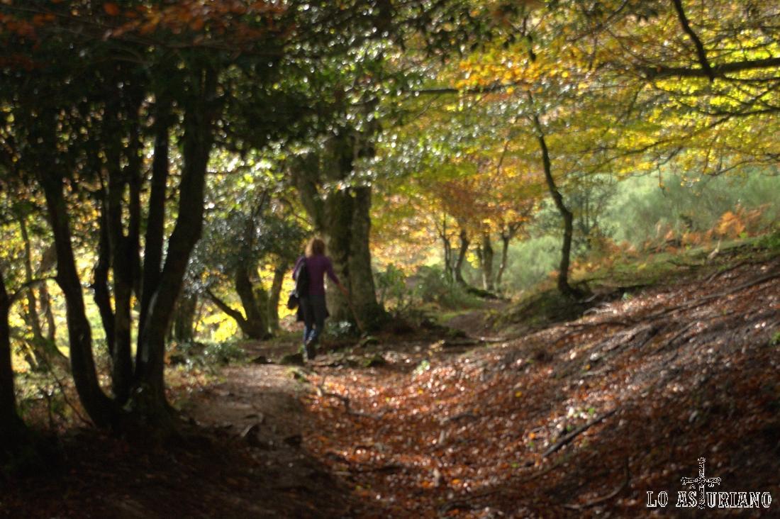 El bosque se abre al fondo y oímos voces: estamos ya en la entrada de la vega.