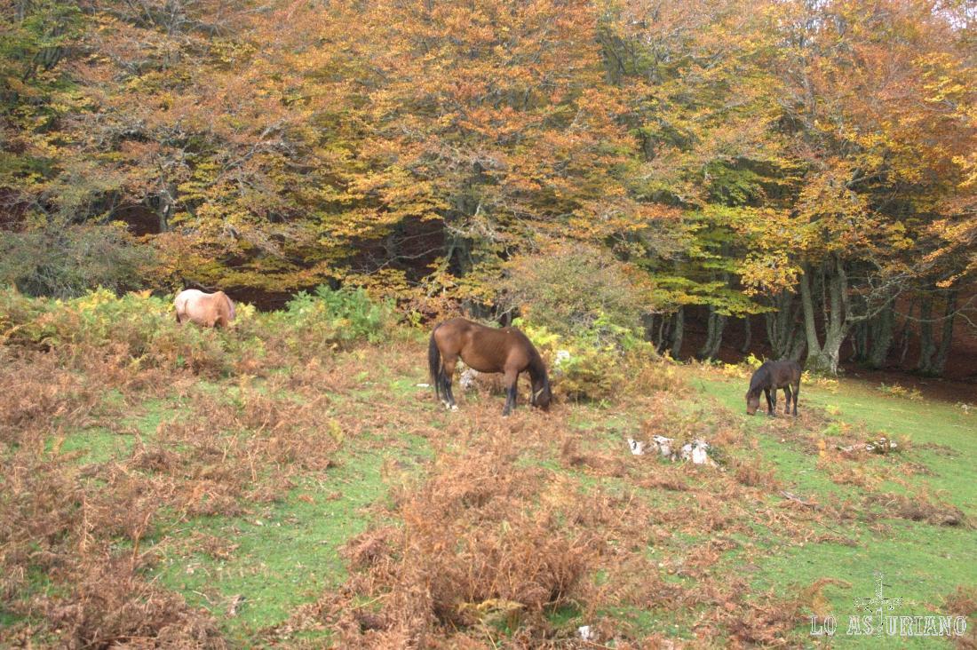 En este claro, aparecen por sorpresa estos caballos.