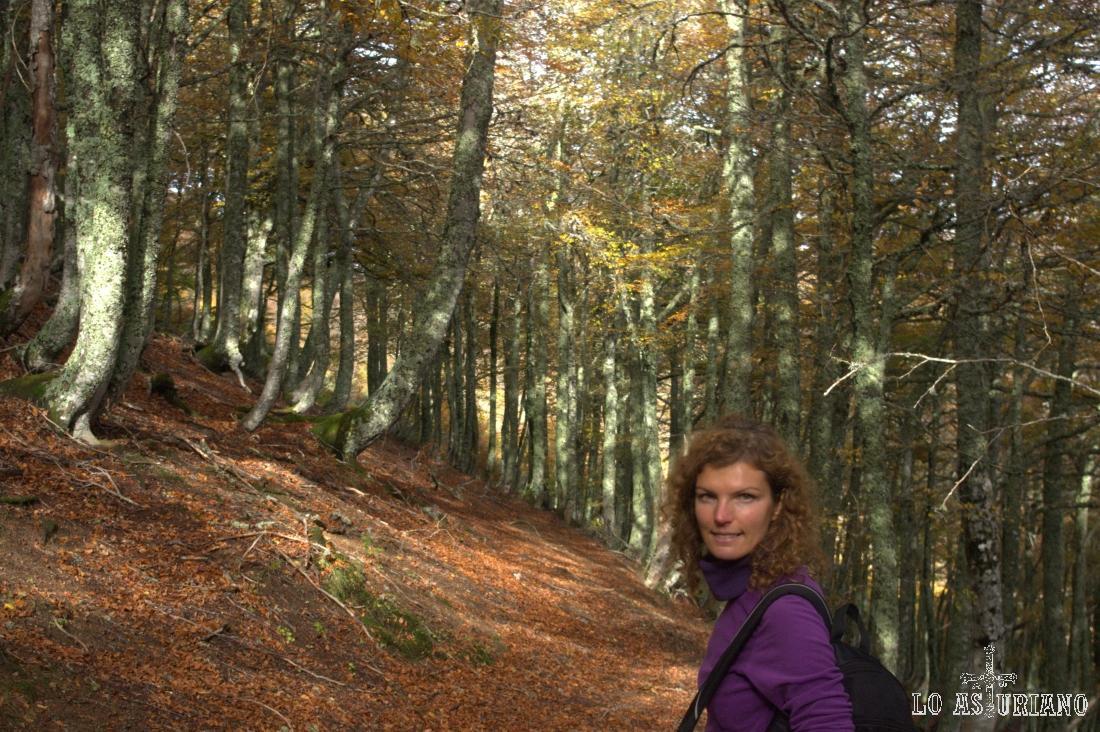 Bosque de Fabucado en el Parque Natural de Redes.