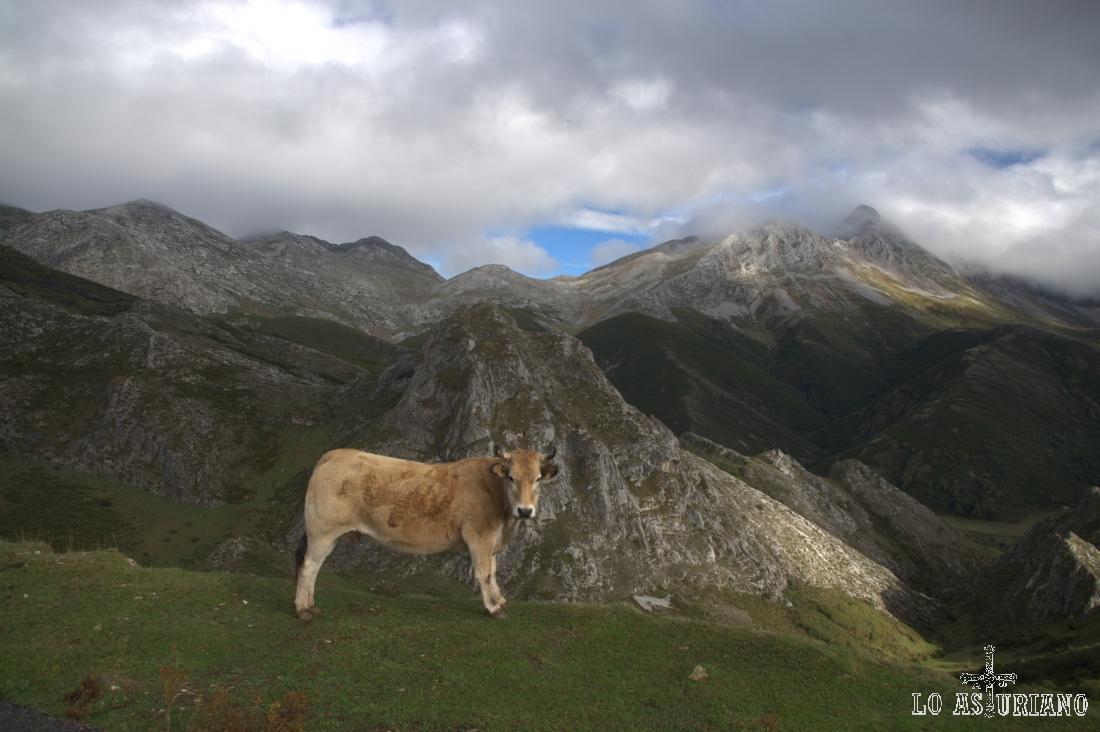 El Fontán, el Siete, Cueto Cabras y entre nubes, las Ubiñas.