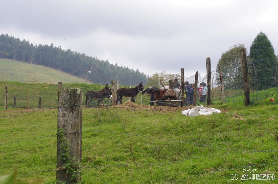 Los chavales disfrutan de un montón de animales de diferentes razas en La Bouza: burros, avestruces, cabras, conejos, cerdos...