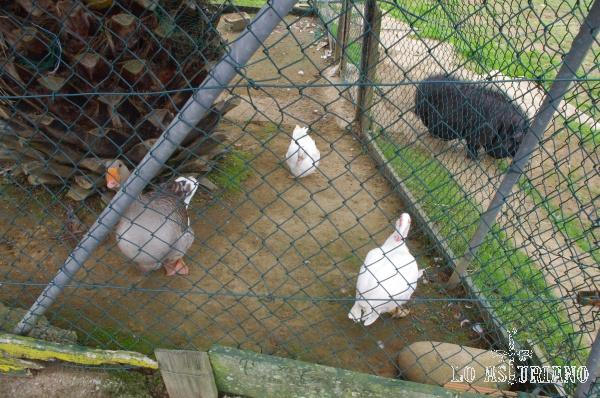 Algunos de los animales de la Bouza.