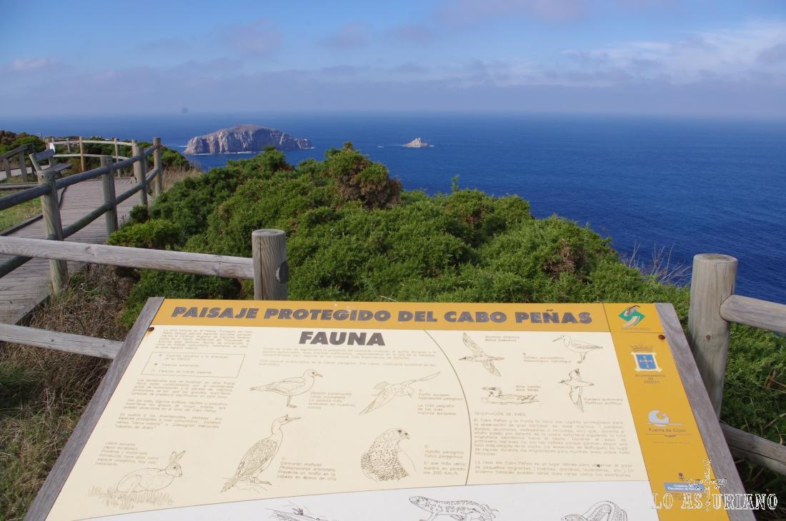 Pasarela en el paisaje protegido del Cabo Peñas; zona de brezales, acantilados, aves marinas y migratorias.