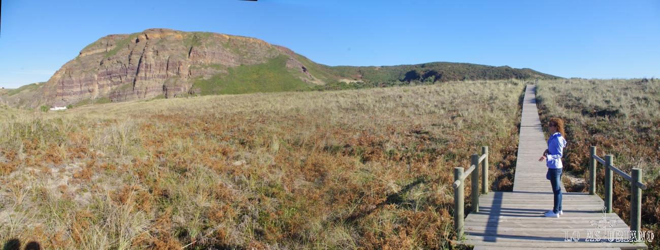 Panorámica de la zona dunar de Xagó; la bonita arenaria es la planta que fija las dunas.