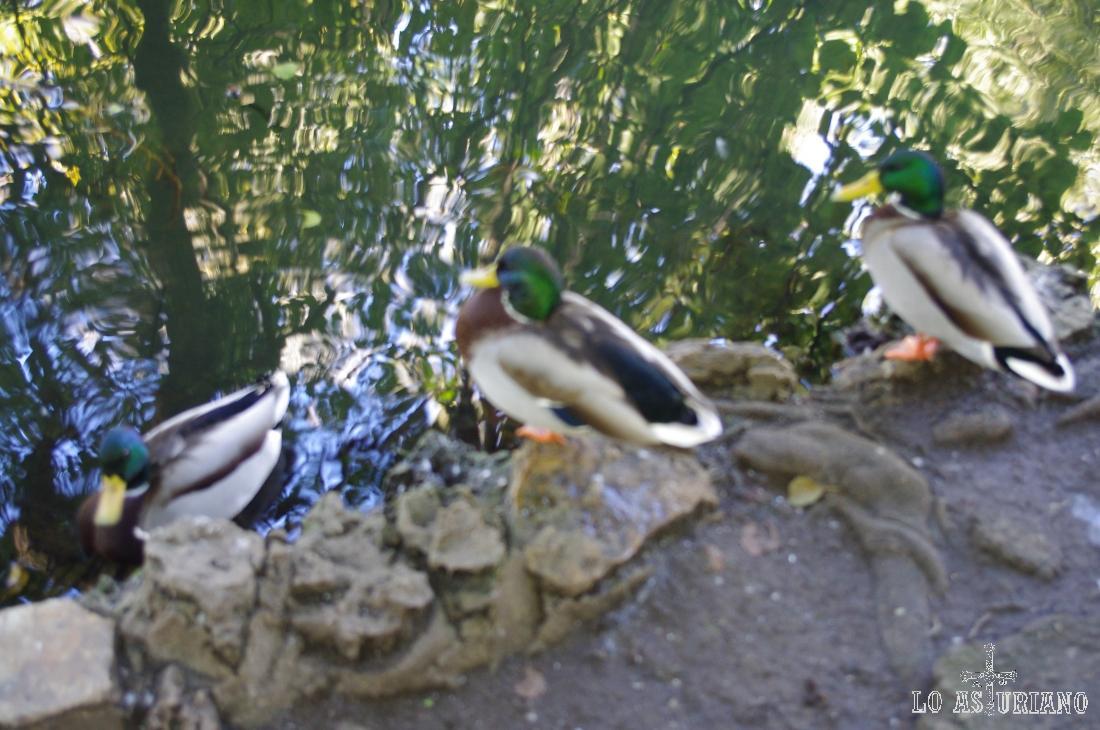 Pequeño estanque en el Parque Ferrera de Avilés.