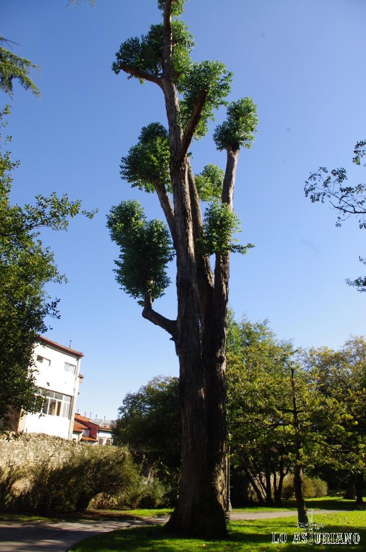 No reconozco la especie, pero el árbol de verdad que es espectacular.