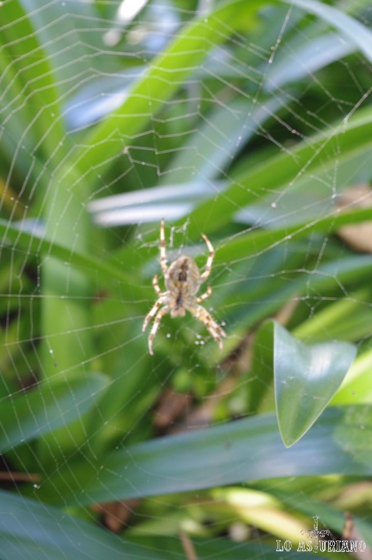 Tela de araña en el centro de Avilés.