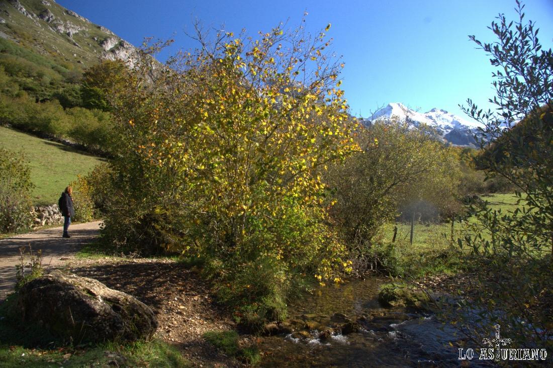 El río Valle, que baja desde el Lago del Valle, en Somiedo.