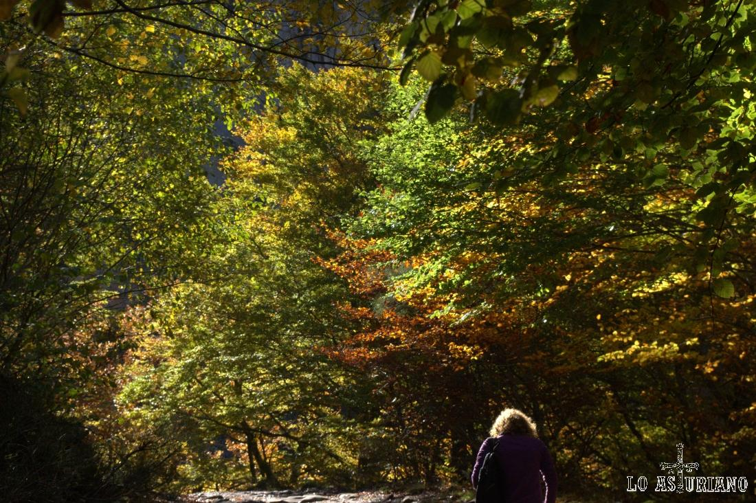Los árboles del bosque están empezando a tomar los colores pardos del otoño.