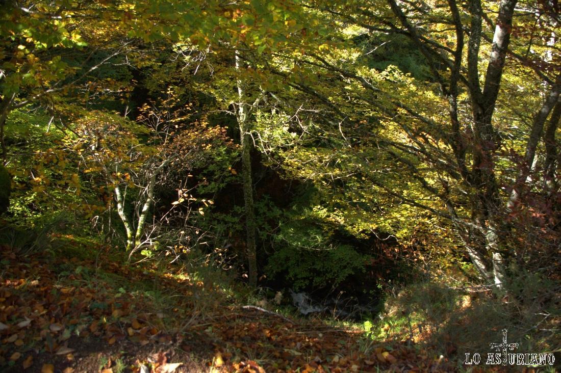 Bosque en Somiedo.