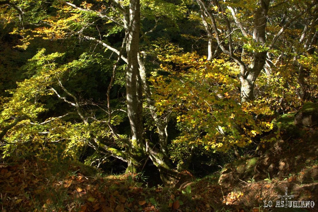 Preciosos colores en el bosque somedano.