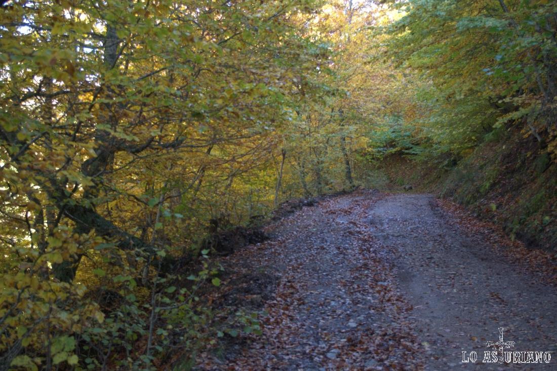 El camino atraviesa el bosque; la subida es muy llevadera.
