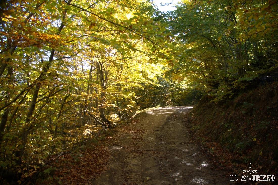 El delicioso bosque de hayas, que nos arropa en este tramo de la ruta.
