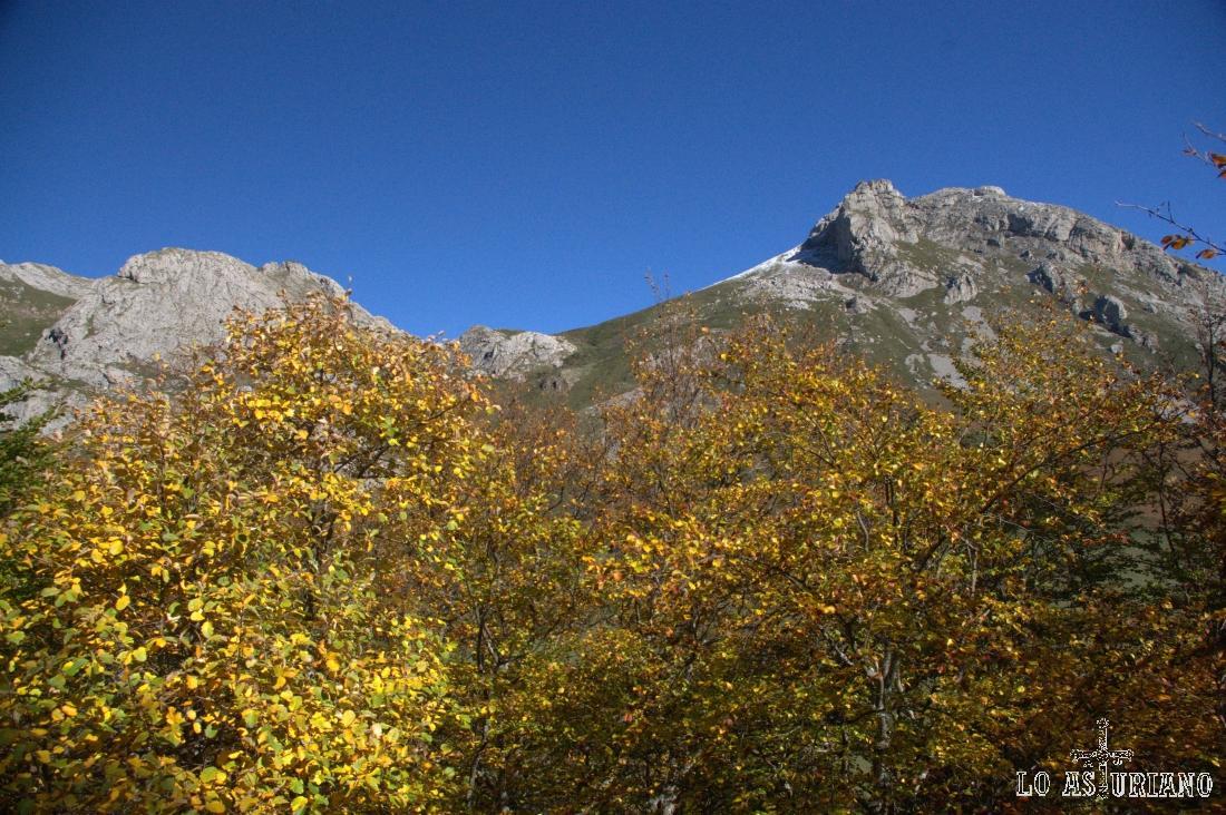 Las hayas han adquirido ya un tomo amarillo parduzco, tan característico del principio del otoño.