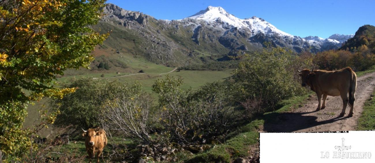 Panorámica en Somiedo, con el Pico Albo Occidental al fondo, ante la mirada curiosa de 2 vacas roxas, a las que sorprendimos con nuestra presencia.