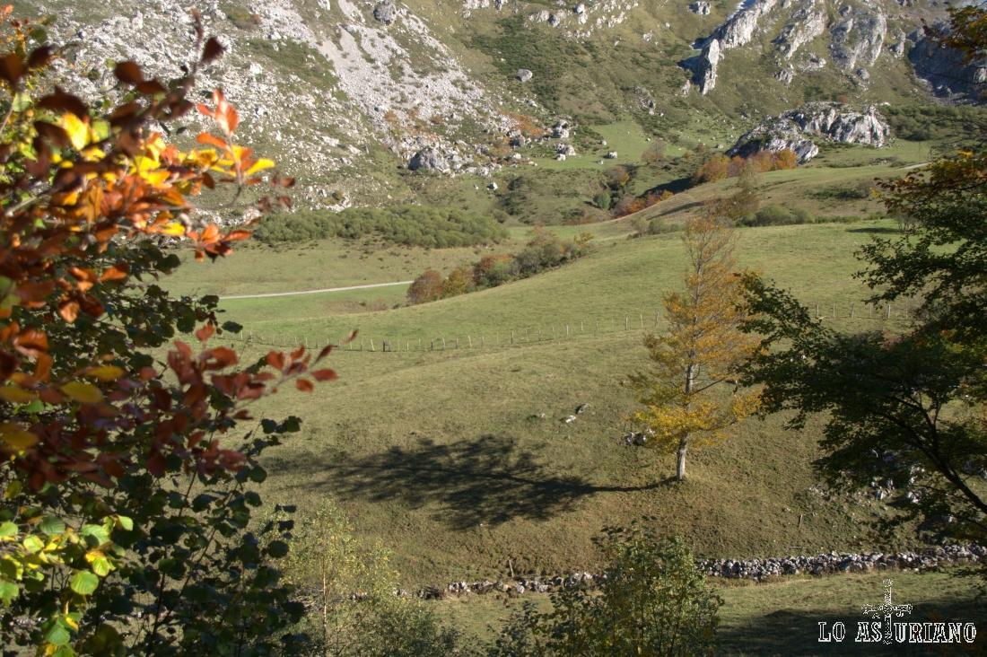 Arbol solitario en medio de la pradera del Valle, Somiedo.