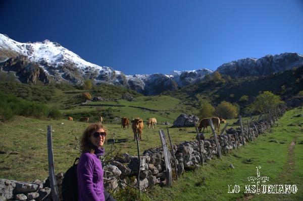 Pastos y vacas en la zona del Lago del Valle del Parque de Somiedo.