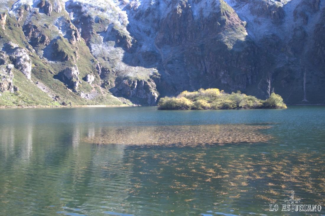 Plantas acuáticas en la superficie del lago del Valle de Somiedo.