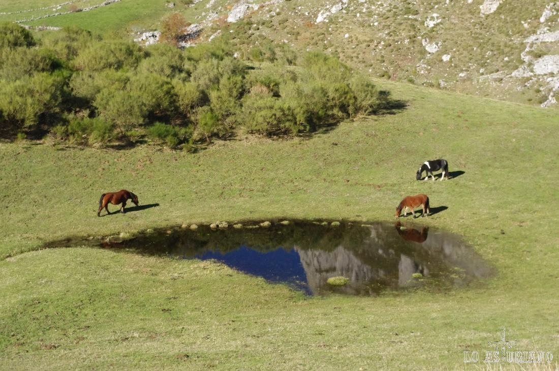 caballos en la pradera del Valle