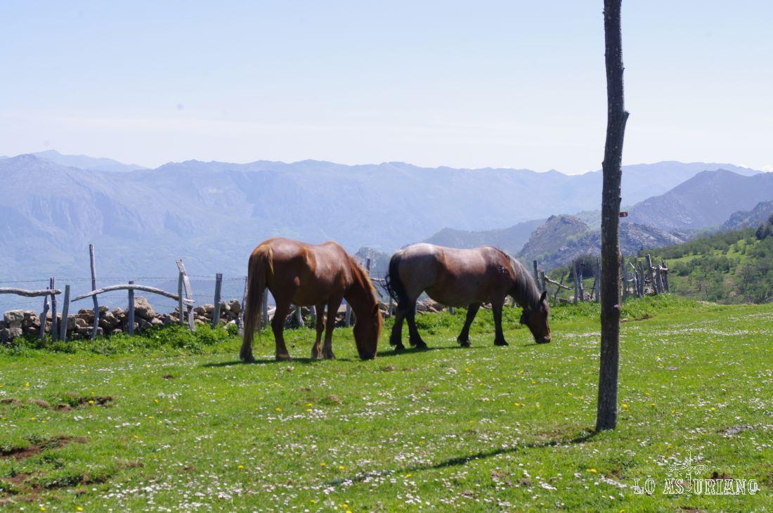 Caballos en las praderías con vistas al valle de Villamor.