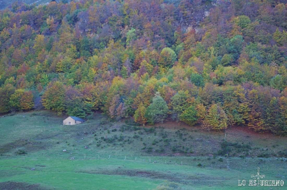 El bosque está, a primeros de noviembre del 2013, adquiriendo el colorido otoñal.