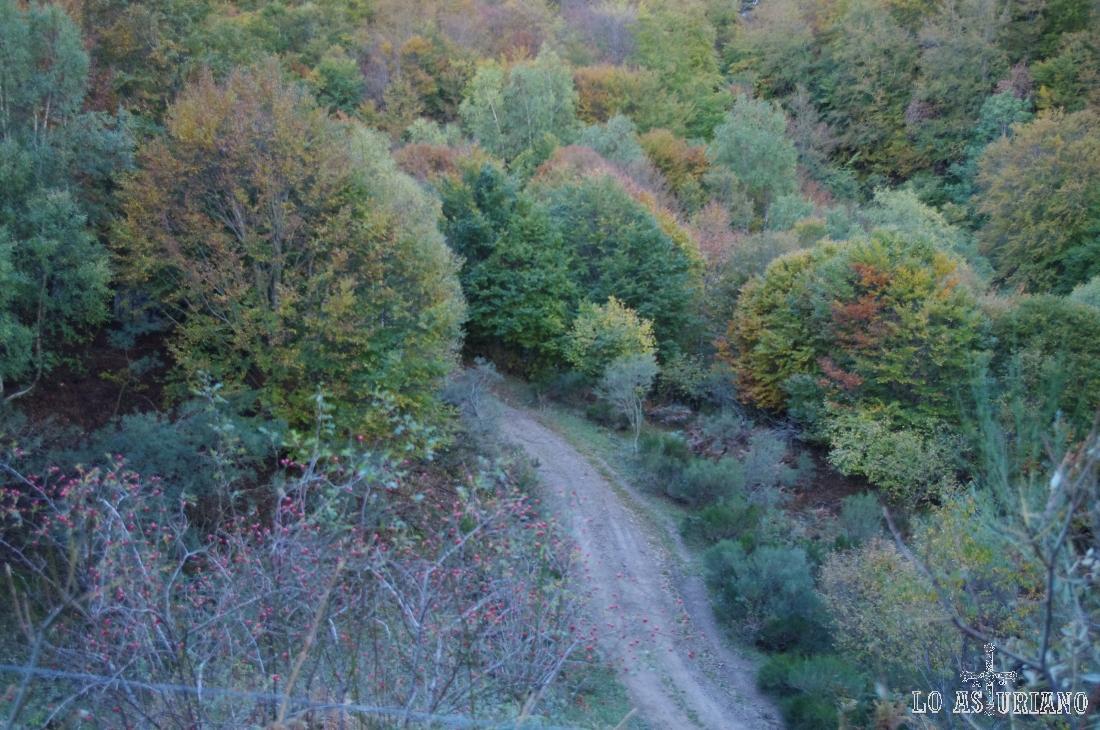 Vemos el camino por el que hemos subido, y que está unos metros por debajo de la pista de bajada.