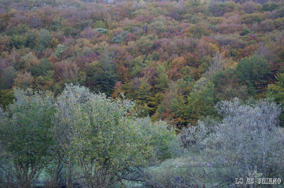 Bosques en Somiedo.