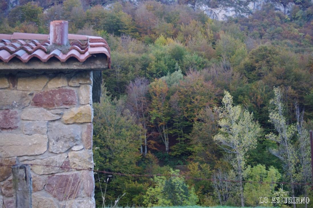 Bosque en la zona del Curuxeu.