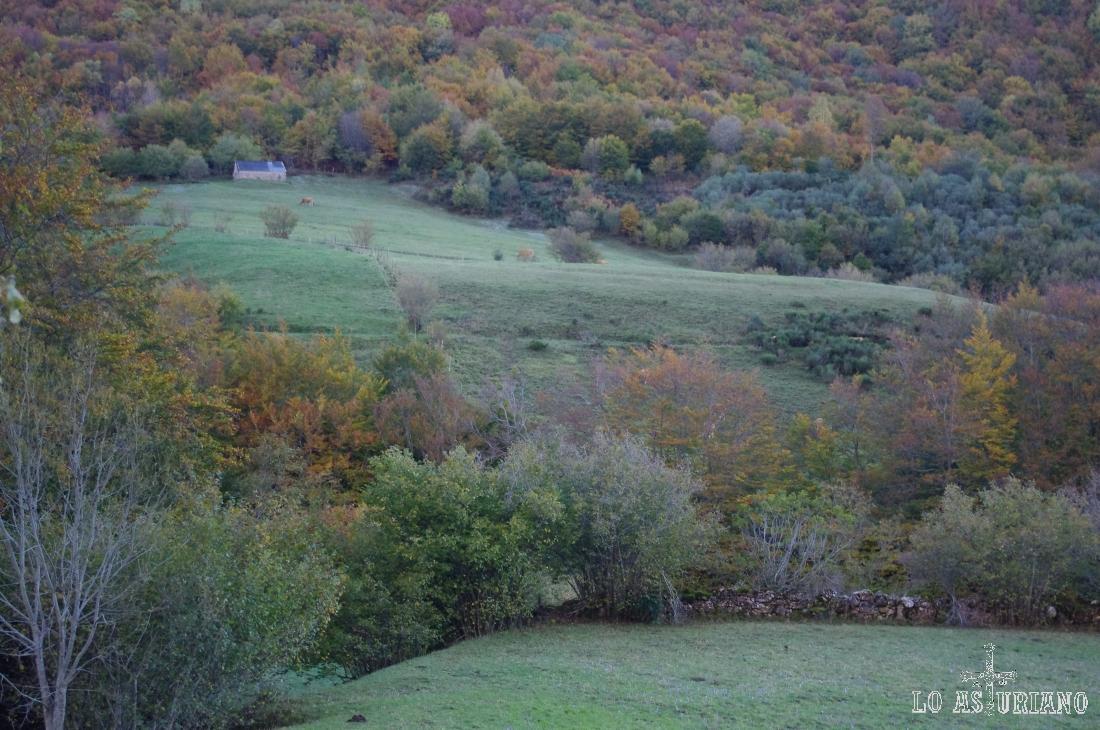 La Vega de Campriondo tiene el bonito contraste del espeso bosque y de los pastos.