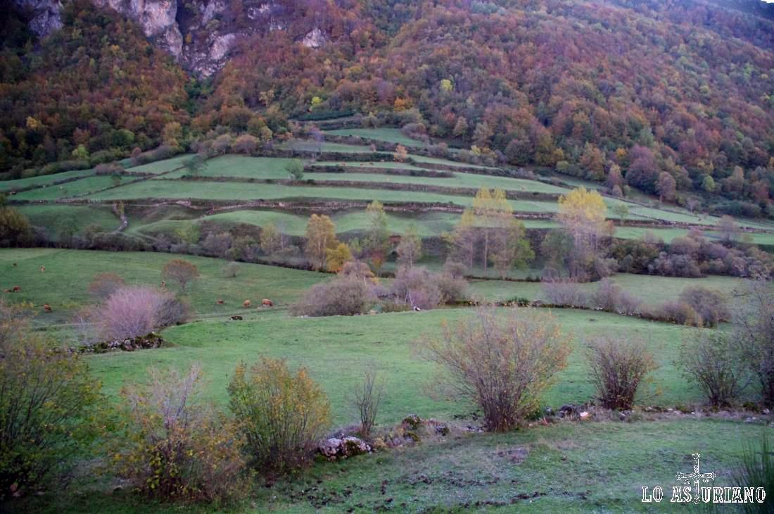 Diferentes terrazas con pastos en el Vega de Campriondo, en Valle de Lago.