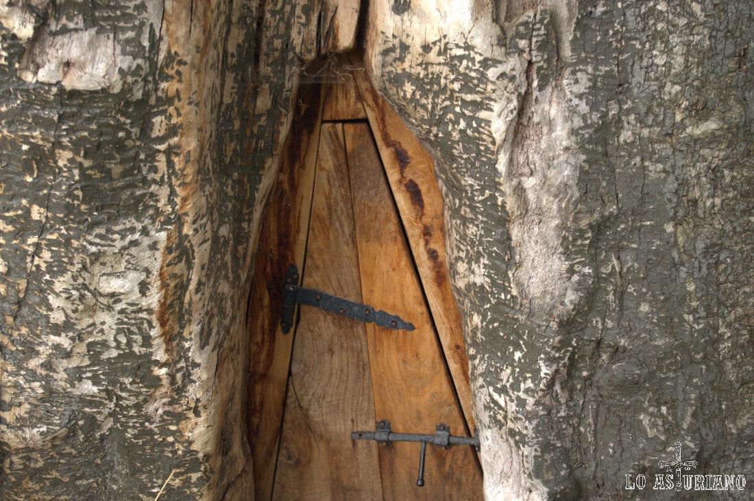 Portilla que está en el tronco del famoso rebollo de Bermiego, en el bonito pueblo quirosano.
