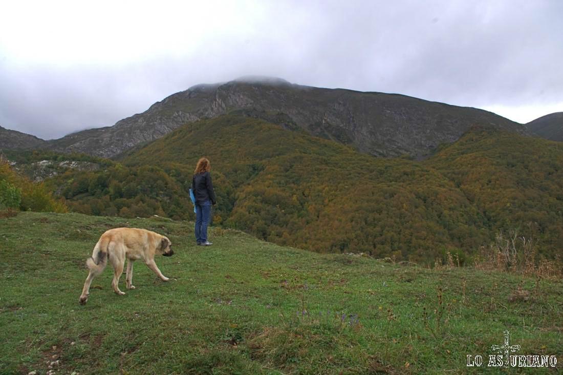 Las vistas se abren, después de bordear la Peña el Castiellu, hacia el bosque de la Enramada, en el valle del Sousas.