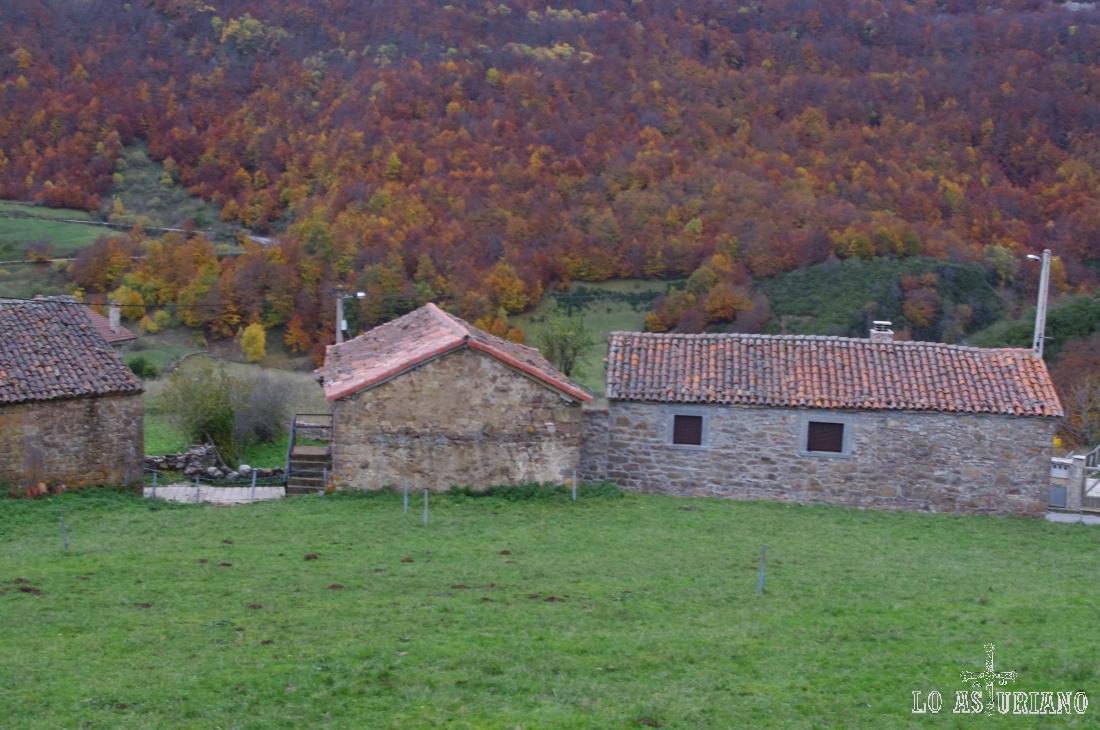 Hayedo en el Chanu Navarín, desde La Peral, concejo de Somiedo.