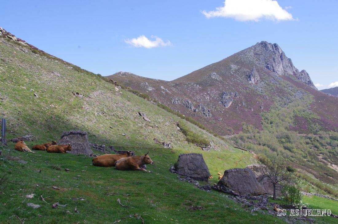 Braña de la Corra, en el valle de Saliencia.