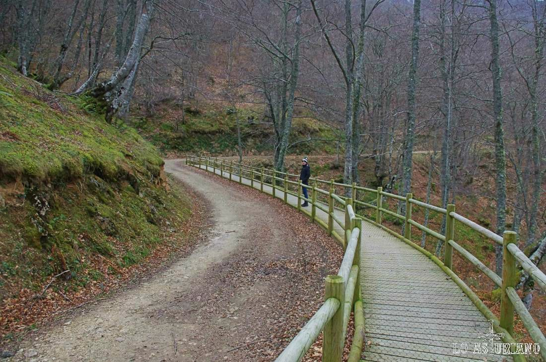 Pasarela y hayedo de Montegrande, con los esbeltos troncos grises desnudos, en el mes de febrero.