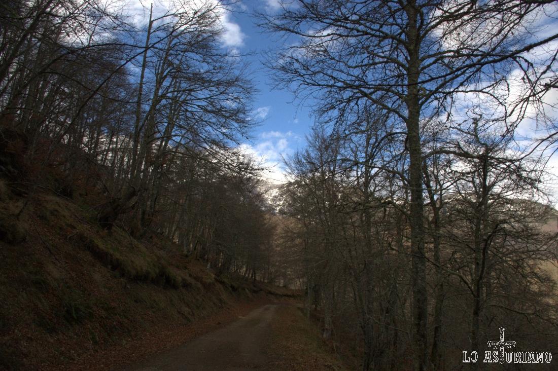El camino llanea hasta llegar a la zona del río Barranco de la Verde.
