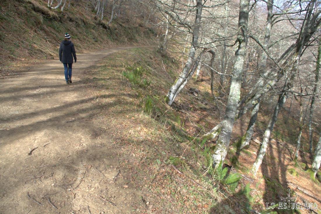 Fíjate en las laderas: los hayedos gustan de laderas empinadas y húmedas.